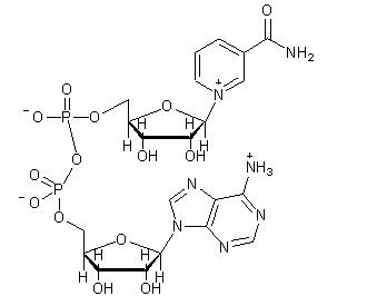 beta-Diphosphopyridine nucleotide structure
